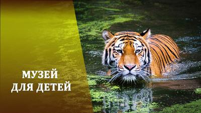 Почему тигры рыжие?